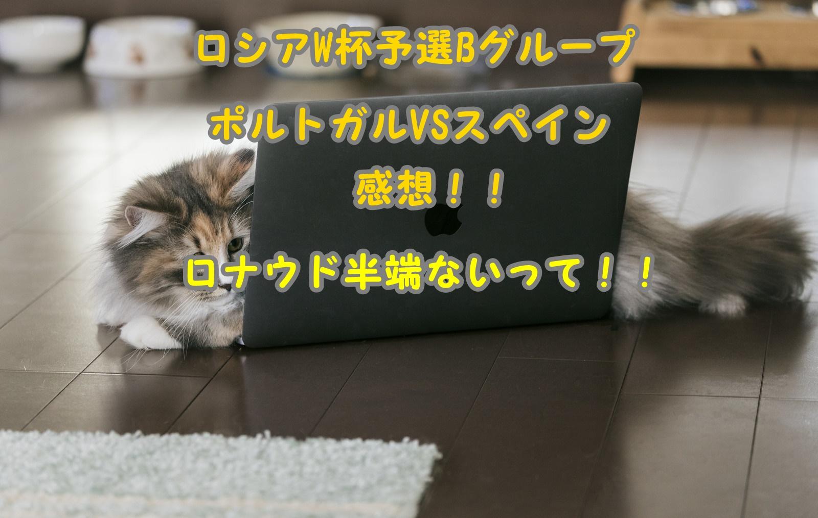 ネコ パソコン