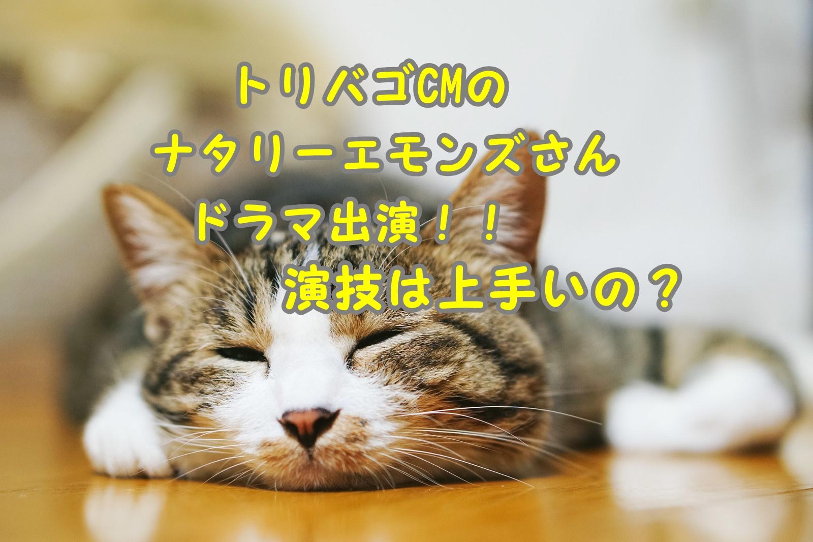 猫 ぺたんこ