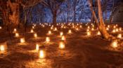夜景 ライトアップ